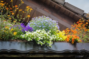 Balkon-Bepflanzung