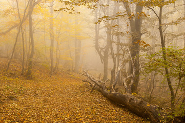 Mistical place in autumnal foggy forest