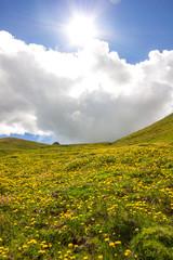 Prato fiorito in montagna