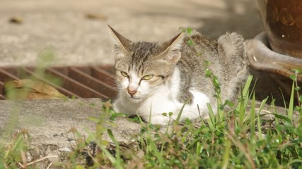 Domestic cat is relaxing on the floor behind the back yard