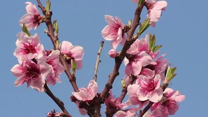 Rich blossom