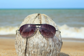 Old coconut lounging on the beach