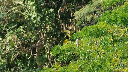 heron is resting on the tree canopy