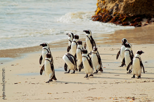 In de dag Pinguin African penguins on the beach