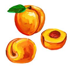 peaches set  vector illustration  hand drawn  painted watercolor
