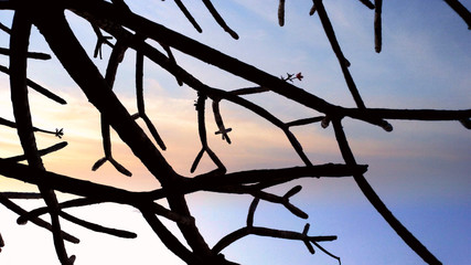 silhouette treebranch and sky