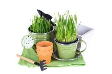 Gardening concept.