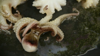 Octopus in hot frying pan then contract turning over with heat.