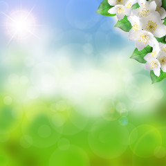 spring or summer blurred background flowers.