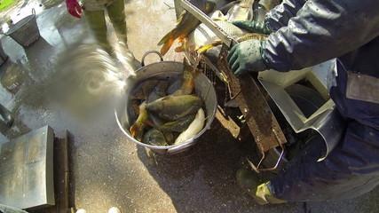 Fishermen Unload The Catch