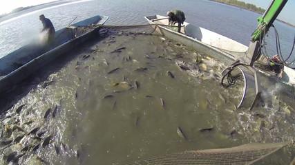 Fish Harvesting Equipment