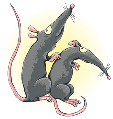 One rat scratches another rat's back