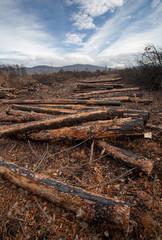 burnt logs