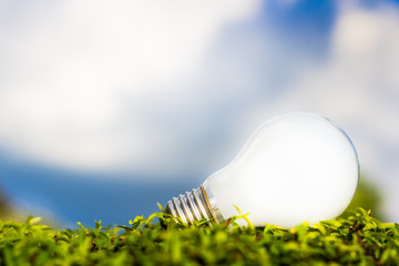 Light bulb on grasses