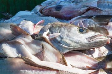 Restes de poisson après la découpe