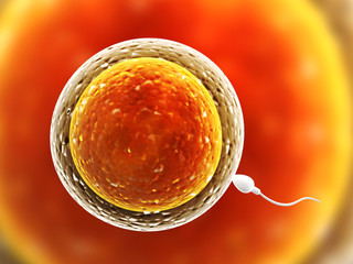 Spermatozoon, floating to ovule