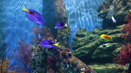 Fishes in coral. Underwater world.