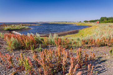 Swedish summer landscape with typical sea coast plants