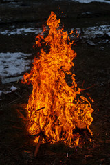 fire in the pine forest