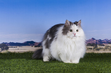 cat in the grass on a background of mountains and sky