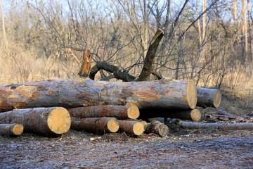 logs on meadow
