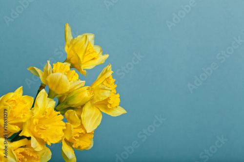 Plexiglas Narcis bouquet of narcissus on blue backgroung