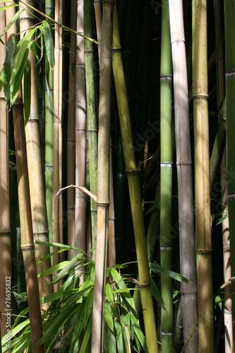 Foto op Plexiglas Bamboo bambuswald