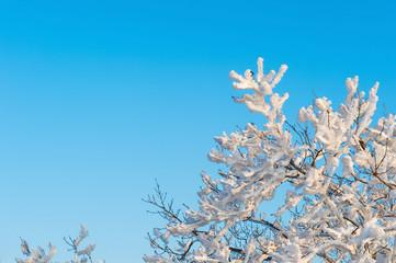 snow on tree,landscape in winter