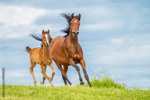 Foto op Canvas Paarden Stute und Fohlen in Bewegung