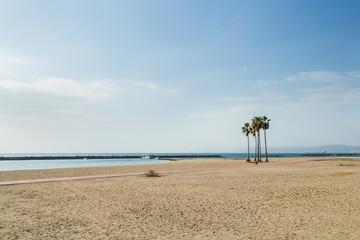 Palm trees in Suma beach, Kobe.