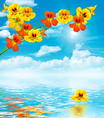 branch nasturtium flowers on a background of blue sky with cloud