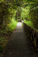 Boardwalk in dense rainforest