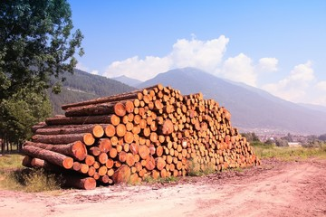 Lumber logs in Italy. Filtered color tone.