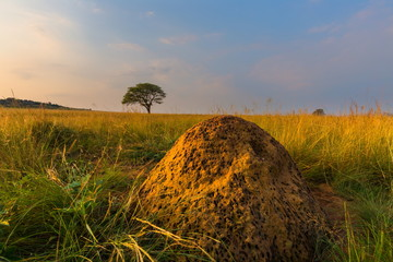 An ant hill and a tree