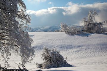 Bianco paesaggio invernale