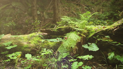 Camera slide near old Tree Stump with Fern leaves