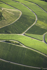 Aerial view of green vineyards with pathways
