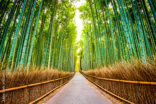 In de dag Japan Bamboo Forest of Kyoto, Japan