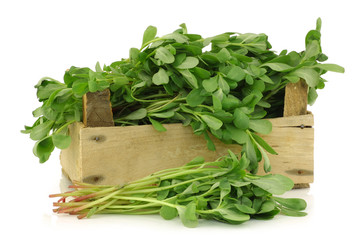 purslane (Portulaca oleracea) in a wooden crate