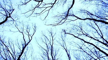 Trees and branches at twilight