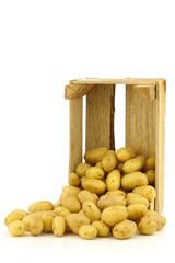 freshly harvested dutch seed potatoes (krieltjes) in a wooden bo