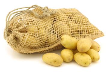 freshly harvested dutch seed potatoes (krieltjes) in a burlap sa
