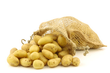 freshly harvested dutch seed potatoes (krieltjes) in a burlap sa
