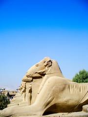 Egypte, belier au  temple de Karnak