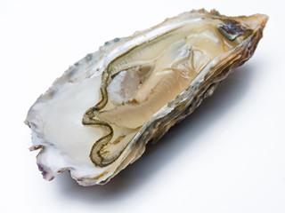 Offene Auster