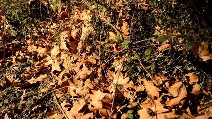 Fallen Leaves in Autmn