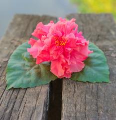 Pink flowers on wood.