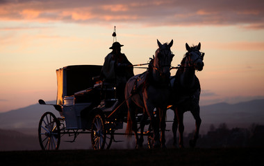 the carriage horsed at the sunset