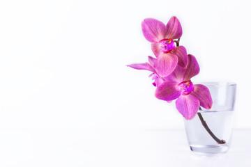 Orchidee im Glas auf weißem Hintergrund