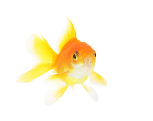 fish on a white background isolated